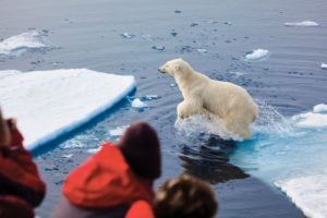 Guests are watching a Polar Bear jumping on ice blocks.